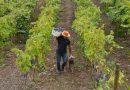 Viña Apaltagua: desde Pirque, uno de los mejores Cabernet Sauvignon del mundo